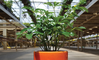 A houseplant from Lynde Greenhouse & Nursery