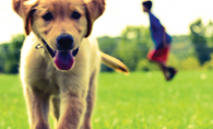 """Run Free,"" a photo of a goldador (golden retriever/lab mix) named Kirby."