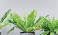 Purify your home's air with ferns.