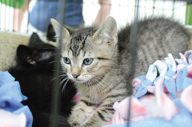 A kitten at the Feeding Furry Friends Family Fun Day.