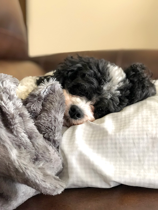 A dog snuggled up on the couch.