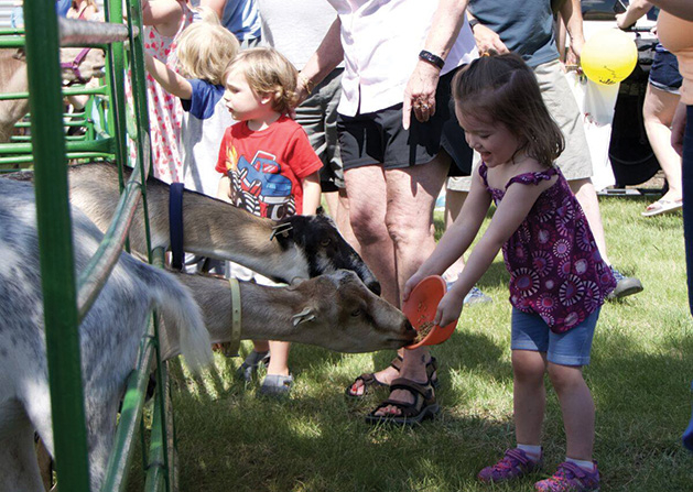 A girl feeds a pair of goats at Maple Grove Days.