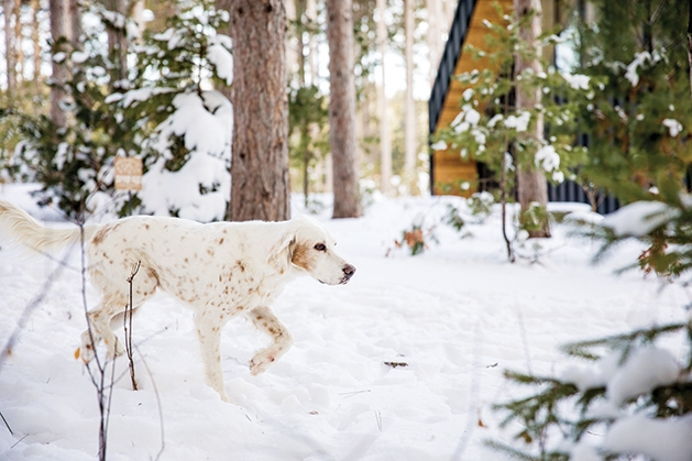 Dog playing outdoors in the snow