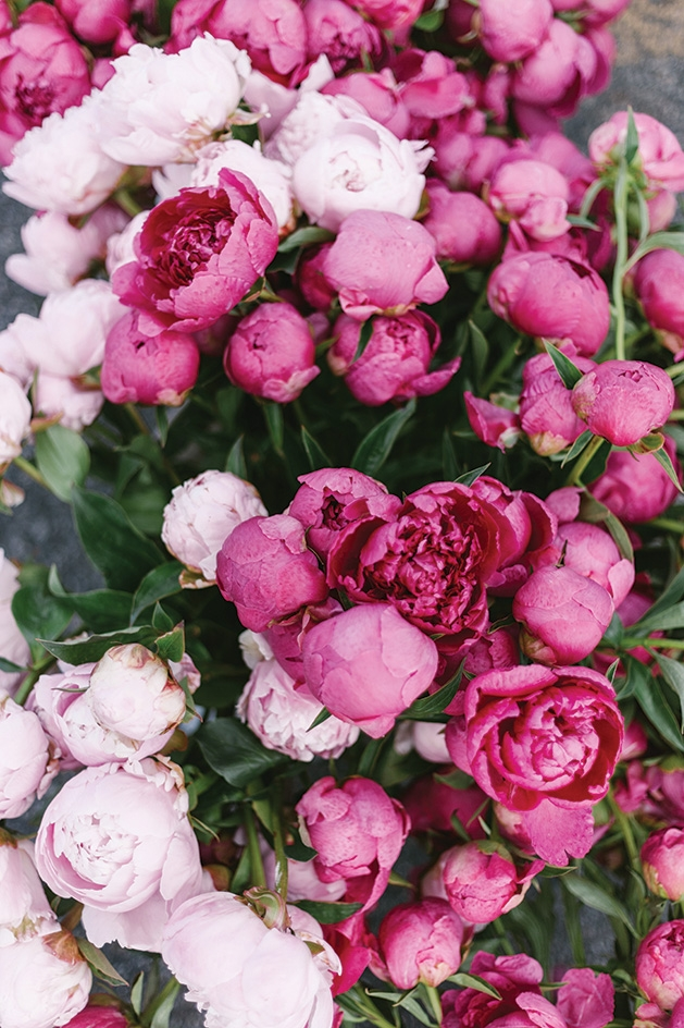 A bundle of pink flowers.