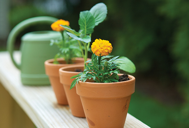 Potted plants sit on a deck, the fruits of a summer camp activity for kids.