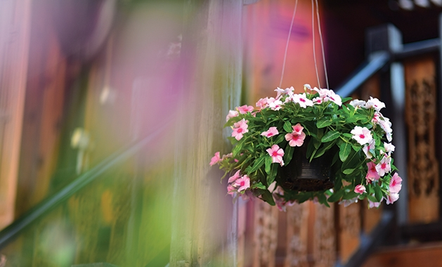hanging planter with flowers