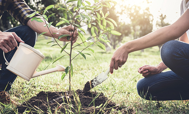 planting trees, apple trees, fruit trees, growing fruit, how to grow fruit trees
