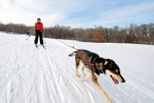 A person and their dog skijoring at Elm Creek Park Reserve.