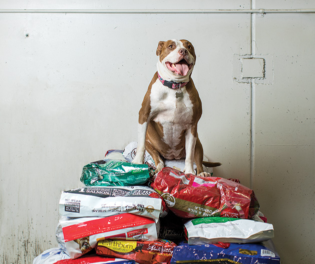 A dog sits atop a pile of dog food donated to nonprofit Feeding Furry Friends